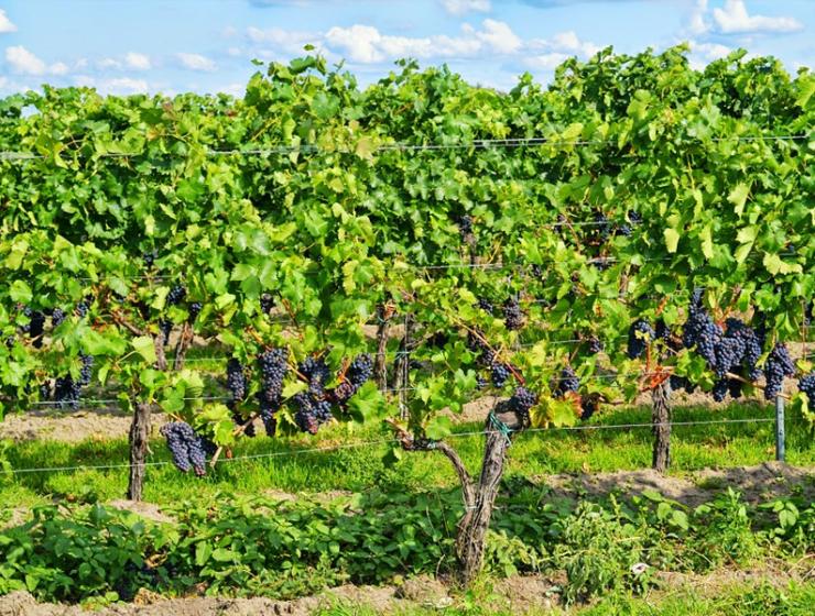 """""""Wat vindt de Nederlandse consument van biologische wijn?"""""""